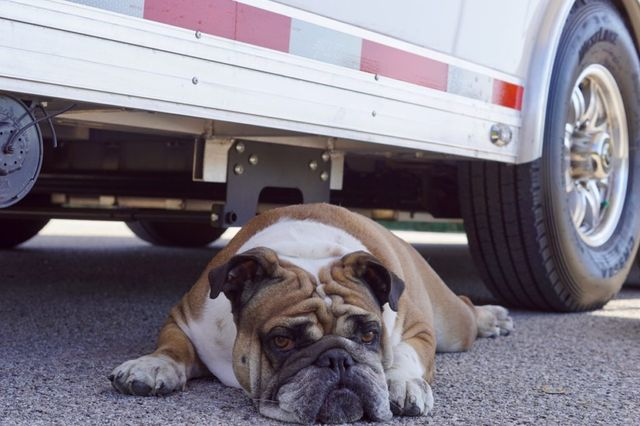 2019 Atc Quest – Mobile Command Animal Rescue in Fort Worth, TX 76111
